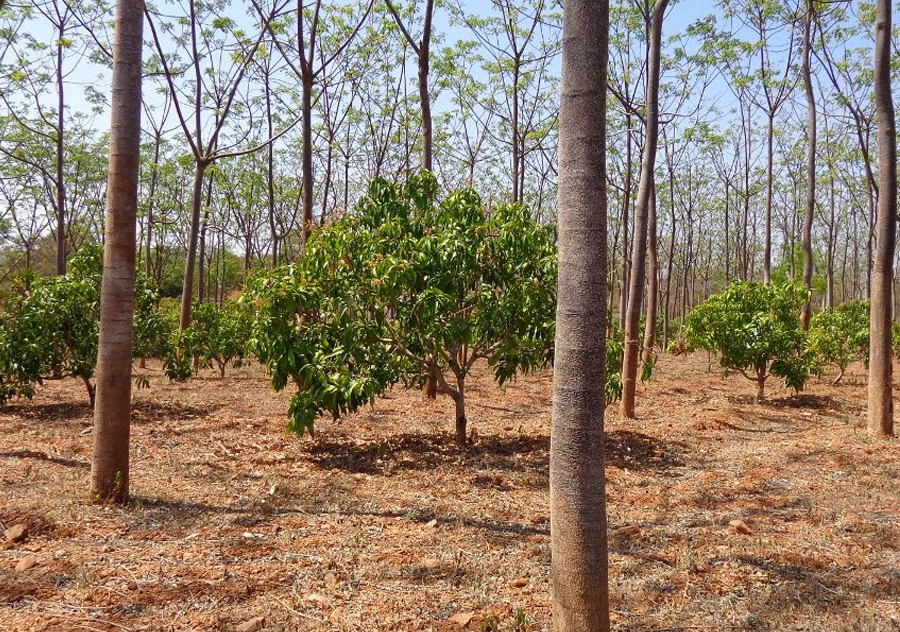 We focus on providing consultancy in Agro Forestry Plantations for the invetors. We mainly focus on commercial crops which fetch High Returns in short period